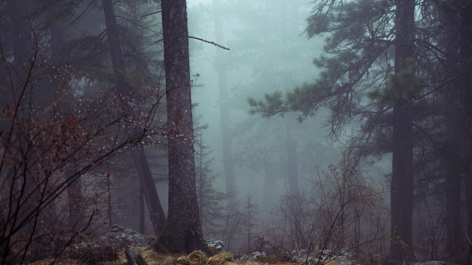 forest-801777_1920